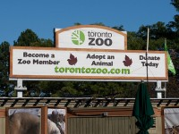 The Giant Pandas of Toronto Zoo