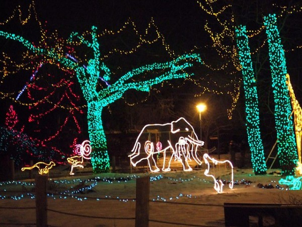 Calgary Zoolights, ©Cloned Milkmen/Flickr