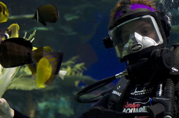 Diver at Ripley's Aquarium, ©City.and.Color/Flickr